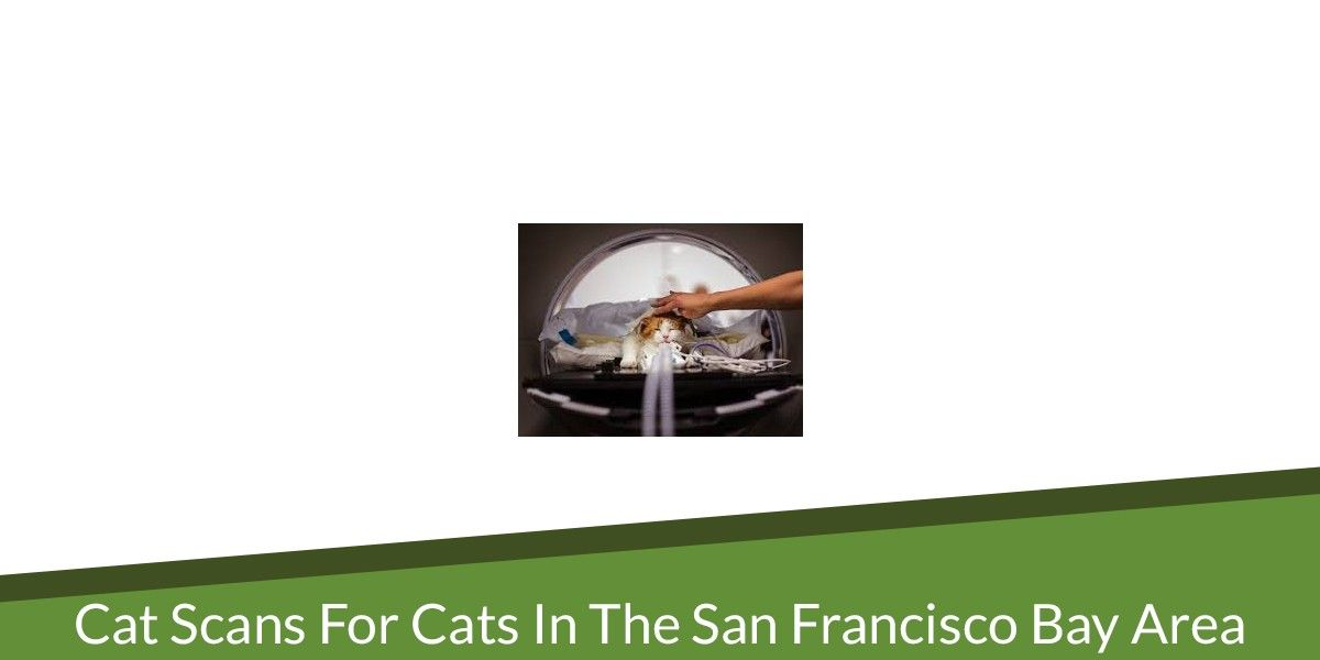 CAT scans for Cats in the San Francisco Bay Area