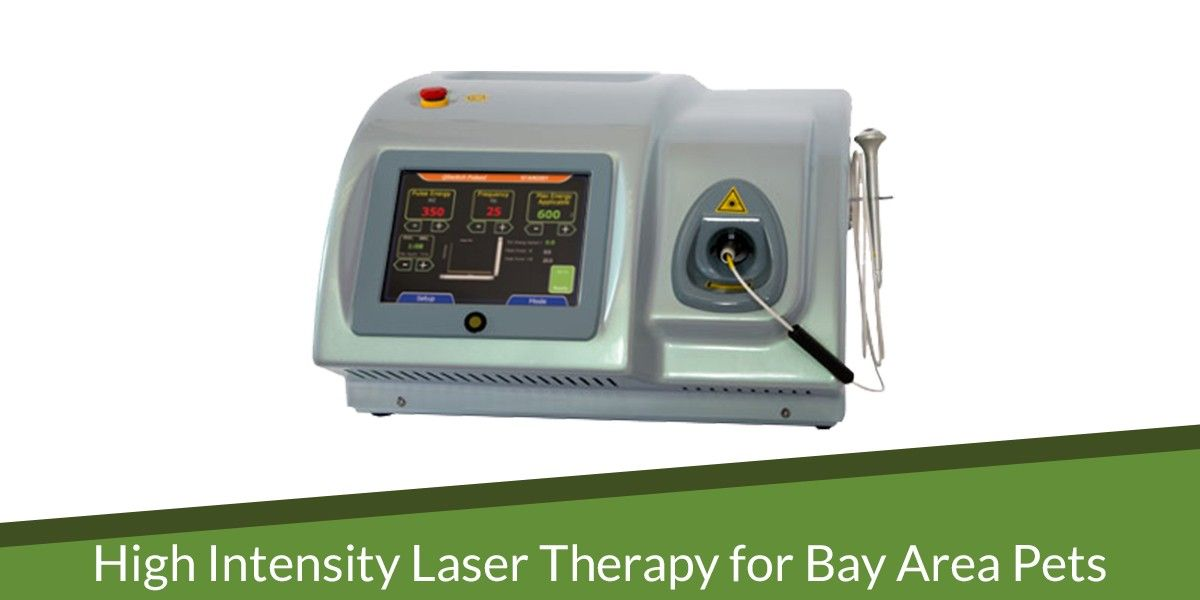 High Intensity Laser Therapy for Bay Area Pets