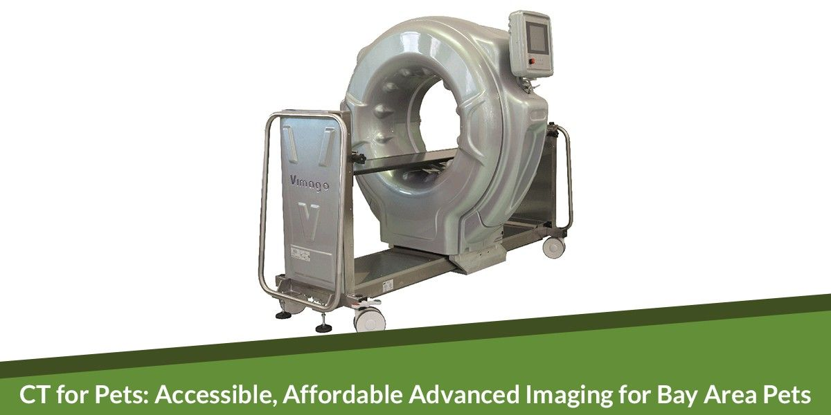 CT for Pets: Accessible, Affordable Advanced Imaging for Bay Area Pets