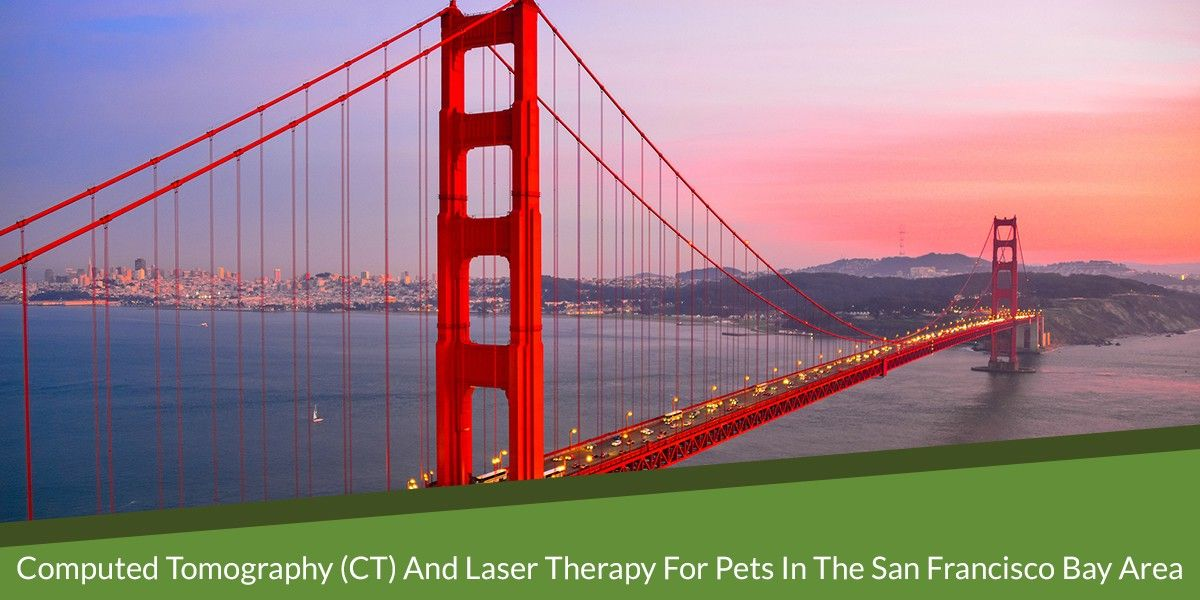 Computed Tomography (CT) and Laser Therapy for Pets in the San Francisco Bay Area