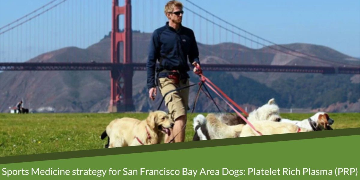 Sports Medicine strategy for San Francisco Bay Area Dogs: Platelet Rich Plasma (PRP)