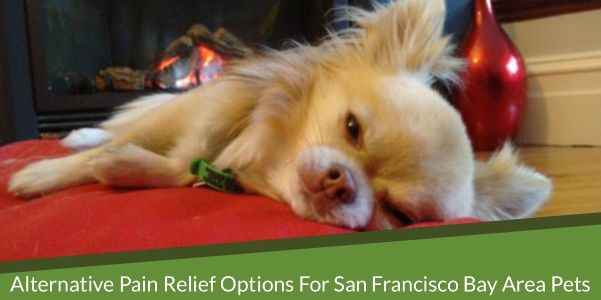 Alternative Pain Relief Options for San Francisco Bay Area Pets